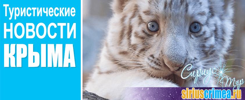 в Ялте на свет появились три редчайших белых бенгальских тигренка