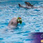 Мир нептуна Экскурсии для инвалидов фото 7